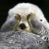 ottersalad%s's Photo